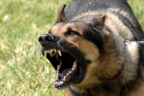 What Does the Law in Florida Say about Dog Biting. Contact a Miami Dog Bite Lawyer Today